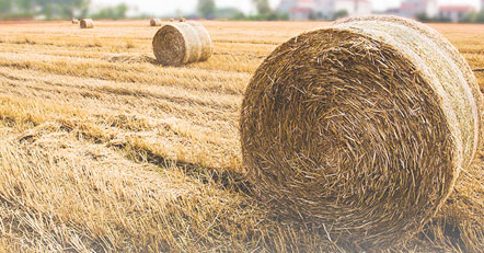 Does the use of biomass energy damage the environment?